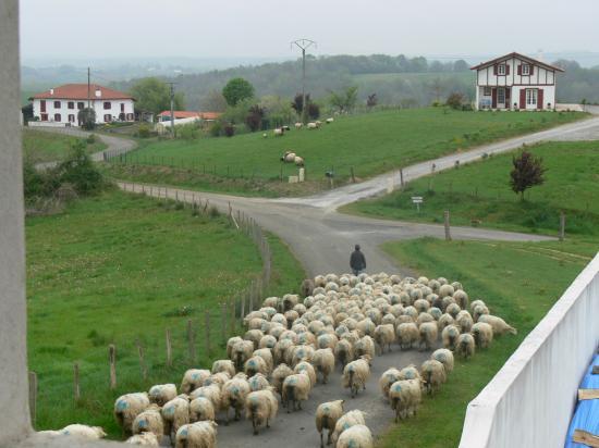 Le Pays Basque et ses moutons
